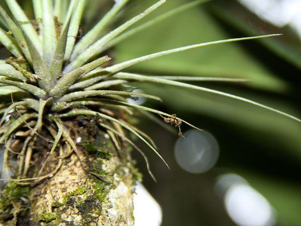 Il segno delle idee archive formiche sul pianeta