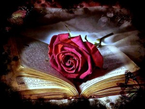 libro-rosa-rossa