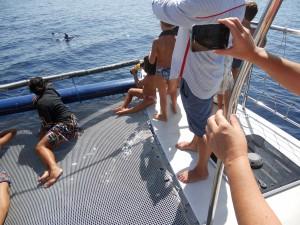 delfini Taranto 049