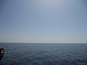 delfini Taranto 052