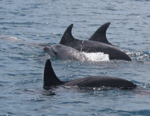jonian-dolphin-conservation